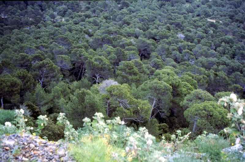 02- Vue depuis la Vigie sur la forêt de la Clape