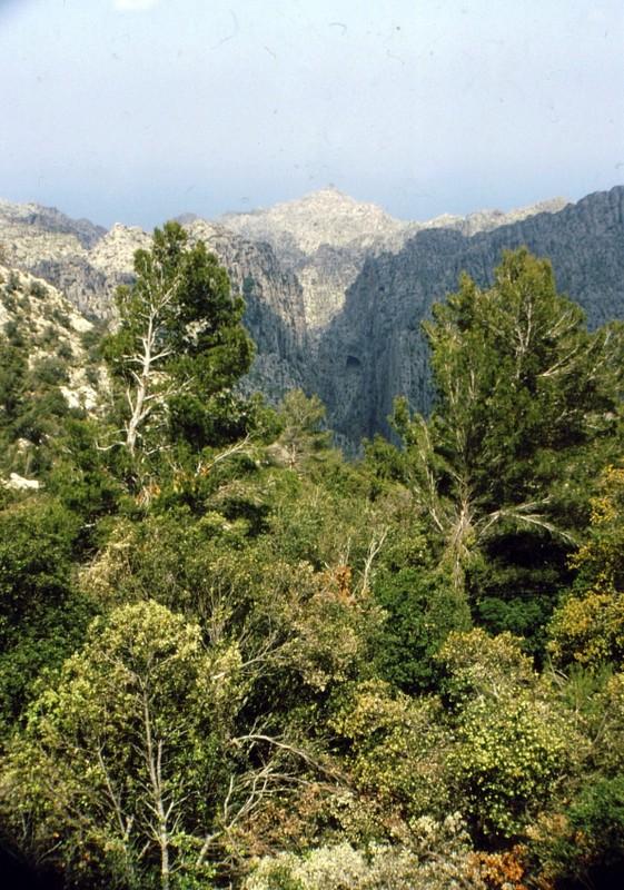 1985 Majorque (Baléares) Vue sur la Calobra