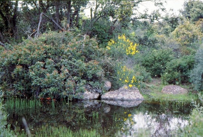10-Autre mare de Roquehaute