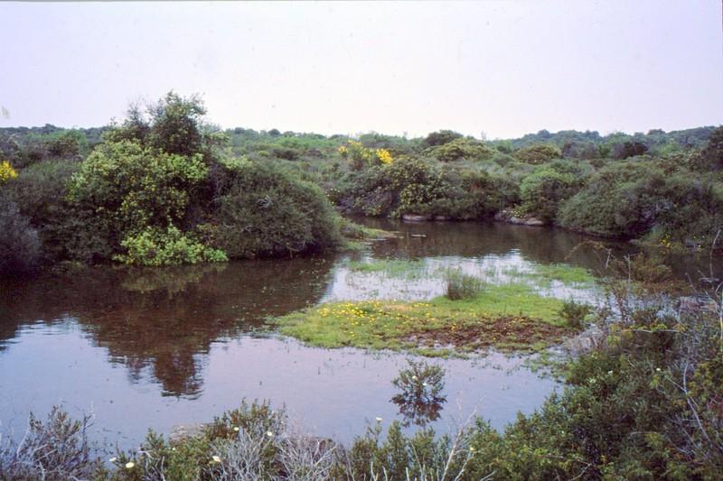 11-Encore une mare de Roquehaute