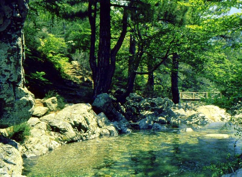 1983 165 Corse- Vizzavonne vers cascade des Anglais