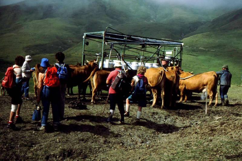 08-La traite près du Cormet de Roselend