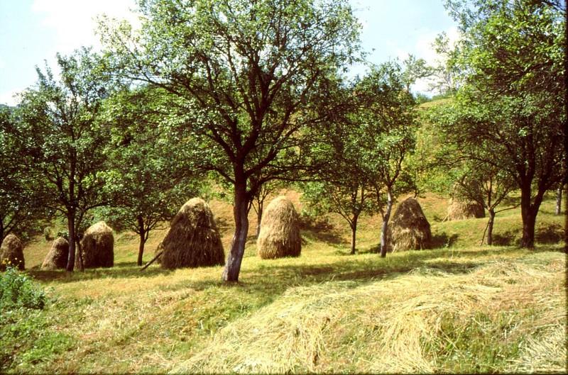 02- JU Route de Visegrad après les gorges de la TARA