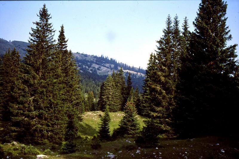 08- forêt vierge de Maglic