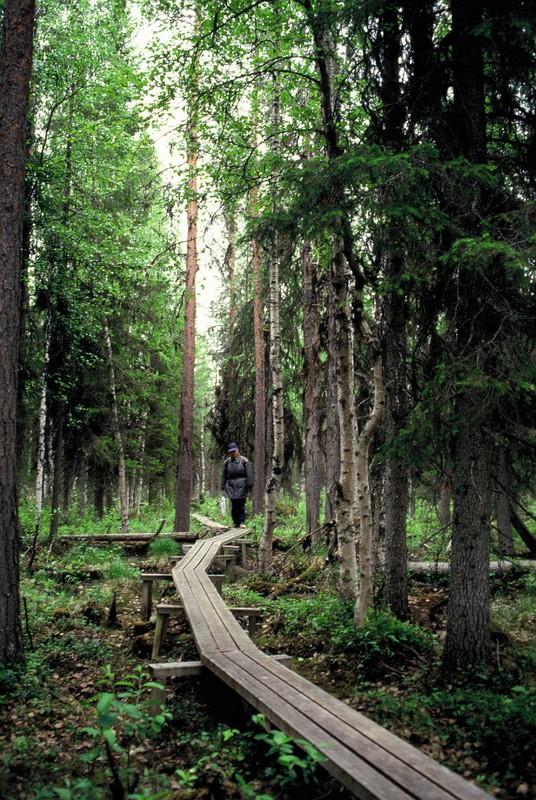 002- chemin de planches au Muddus NP