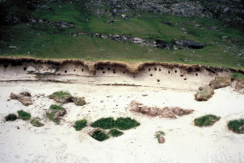 004-Près d'Utaklev muret sablonneux où les hirondelles de mer ont creusé des nids