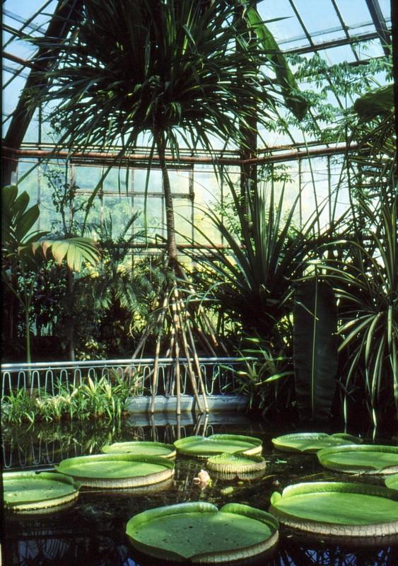 1993 02 Serre tropicale du jardin bota à Cluj Napoca