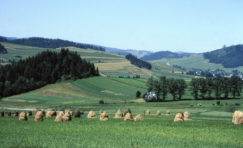Vers Kroscienko : meules et champs