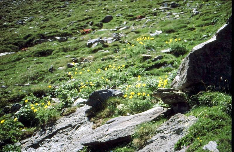 Au-dessus de Nuria : les Adonis en 1988